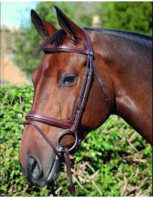 BRIDLES NEW ENGLISH 2