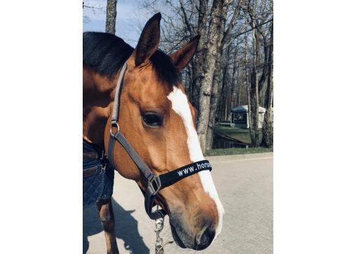 HALTER HORSEMARKET