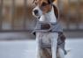 DOG RUG REFLECTIVE